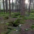 Metsa-ei-ollut-moineskaan-kaunista-mj